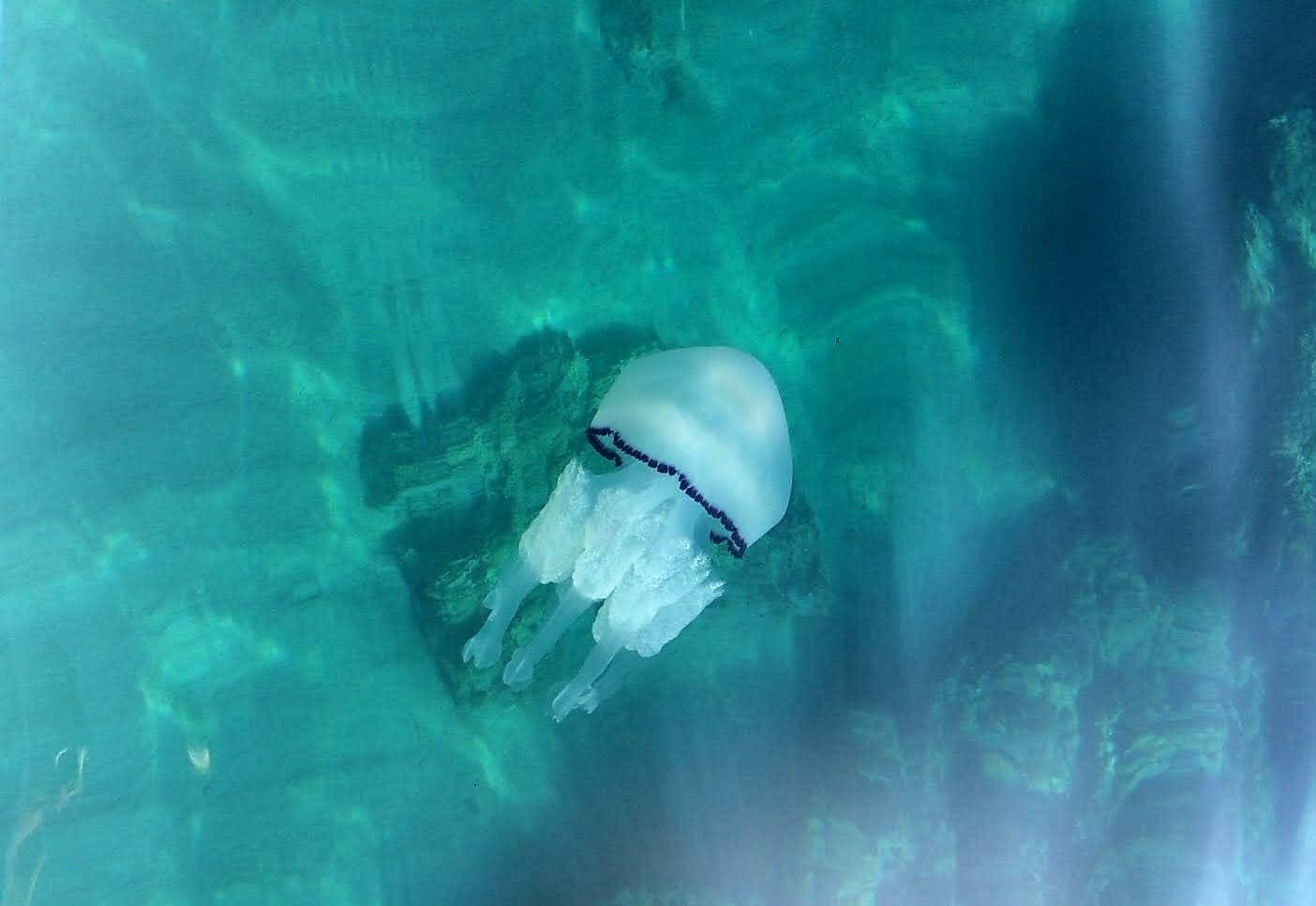 Vacanze al mare: 8 cose da fare (o non fare) se si entra in contatto con una medusa