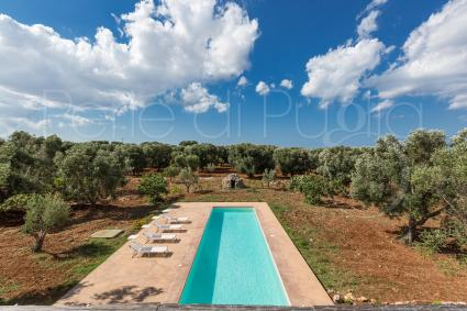 A large turquoise pool surrounded by the olive groves