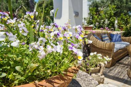 Fiori ed essenze del Mediterraneo profumano le vacanze in Puglia