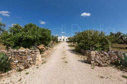 Access avenue with the typical dry stone walls of Salento