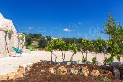 Le vigne decorano e profumano gli esterni della dependance in trullo