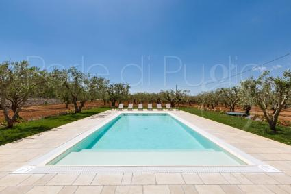 beach loungers and solarium under the olive trees