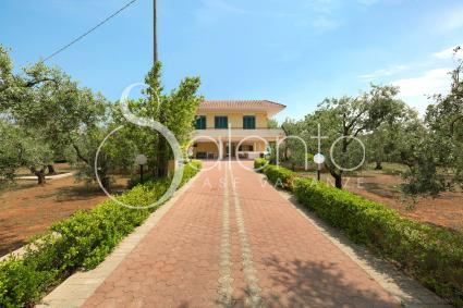 Il viale porta alla villa per vacanze nel cuore del Salento