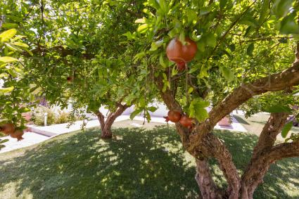 In the garden there are beautiful fruit trees