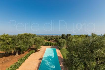 Luxuriant olive trees frame the villa for rent near the sea