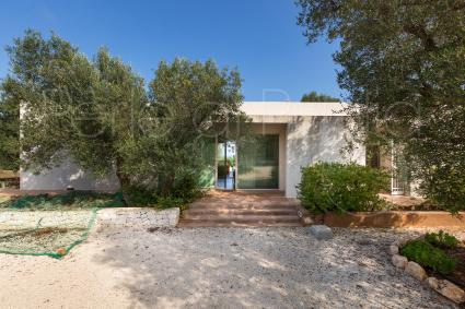 The olive trees frame the villa and are typical of this area