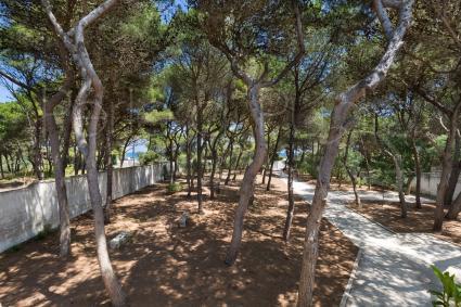La pineta fronte mare attorno alla villa