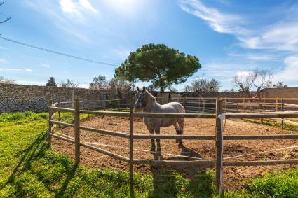 Gli animali della tenuta sono in appositi recinti